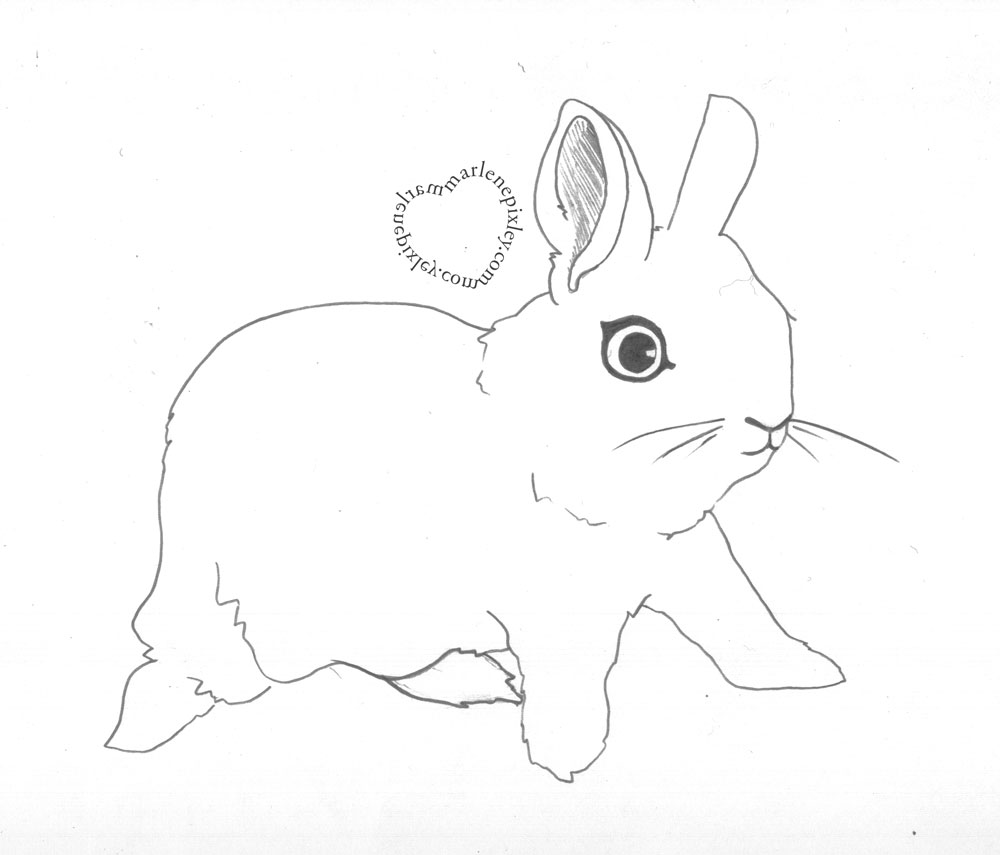 how to draw a bunny pinterest