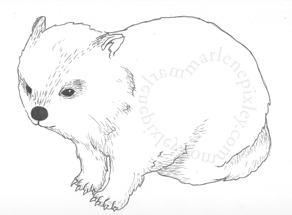 Cute wombat drawing for How to make doodle art